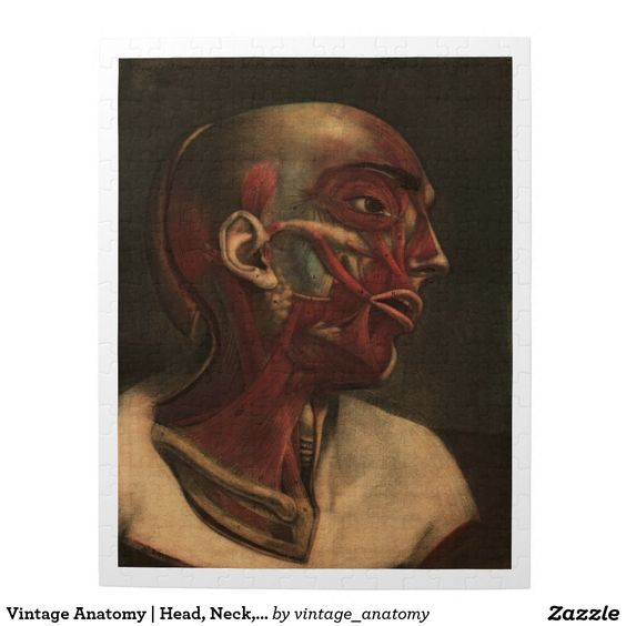 Vintage Anatomy | Head, Neck, and Shoulders Puzzle