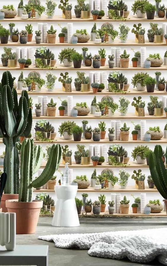 Pin By Econaturista On Cactus Indoor Garden Design Succulents Plants