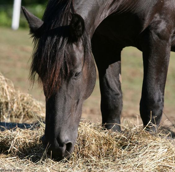Healthy Gut, Happy Horse: 4 Ways to Improve Your Horse's Digestive Health