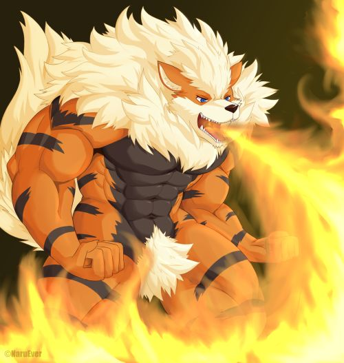 Pokemon fanart muscle arcanine fur furry pinterest - Arcanine pics ...