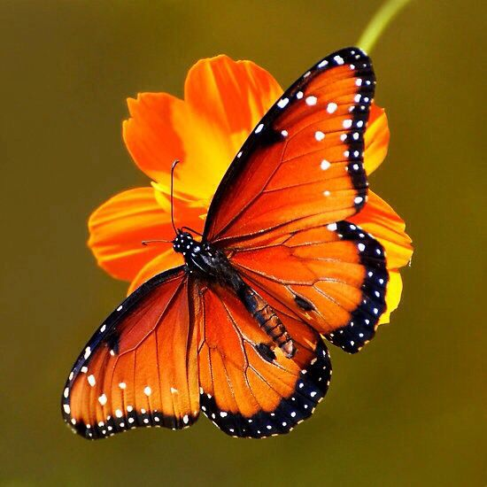 Mensaje De Las Mariposas Ganancia Inesperada Naturaleza En Armonía