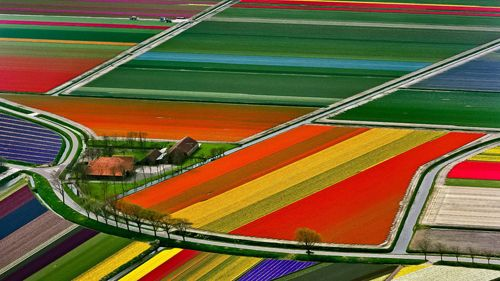 """Lived here as a kid and fell in love with tulips.  I was there during the creation of the first """"black"""" tulip.      Tulip fields, Netherlands, by Tom Seany"""