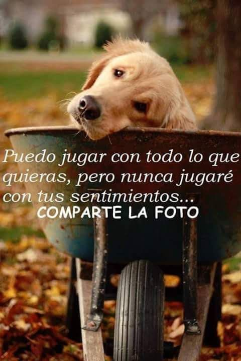 Así Es Amor De Perro Perros Frases Animales