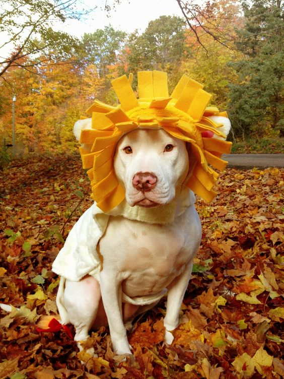 #pitbulls #dogs:
