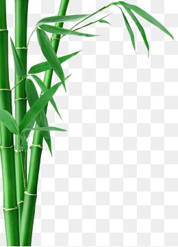 Bamboo Bamboo Bamboo Clipart Bamboo Bamboo Leaves Png And Vector With Transparent Background For Free Download Bamboo Art Bamboo Wallpaper Bamboo Background
