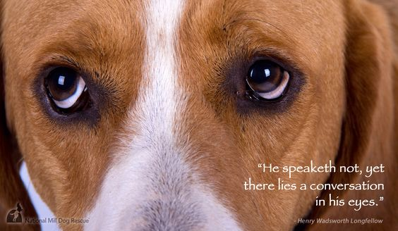 Dogs do speak to us, just not with words. #NMDR #rescue