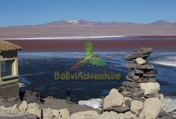 Discover the world's larget salt flat in the world, located in Uyuni, Bolivia!
