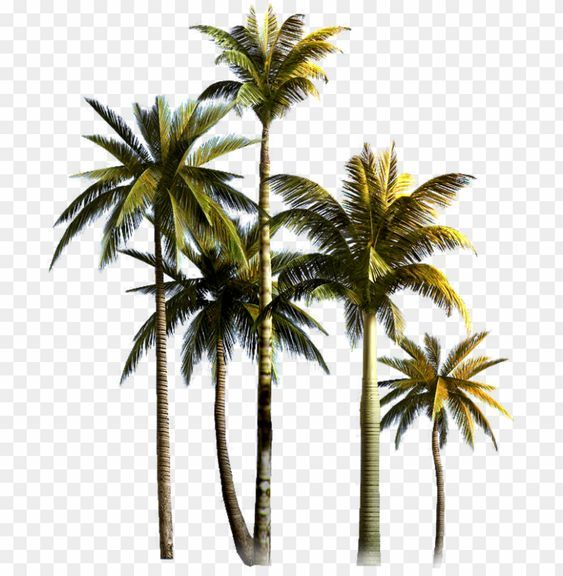 High Quality Palm Tree Png S In 2020 Palm Tree Vector Palm Tree Png Palm Tree Icon