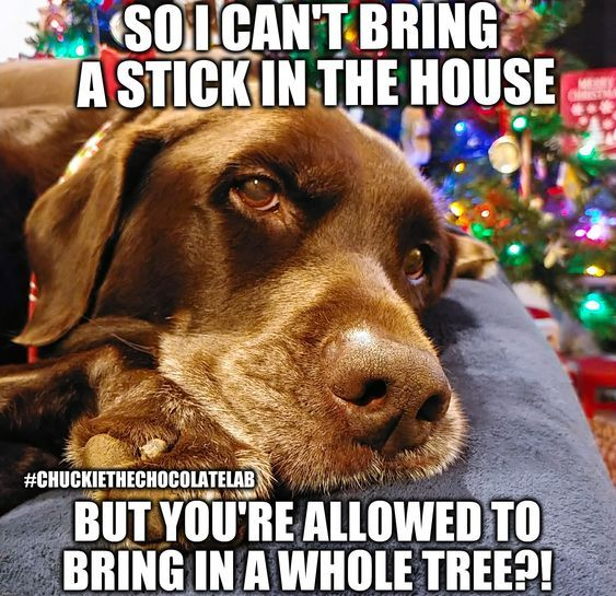 30 Funny Animals So Cute It S A Crime Lab Puppies Funny Funny Dog Memes Funny Labs