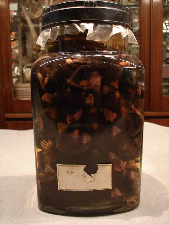 http://www.ucl.ac.uk/museums/zoology/about/collections/objects/lightbox/pickled-moles/jar-of-moles