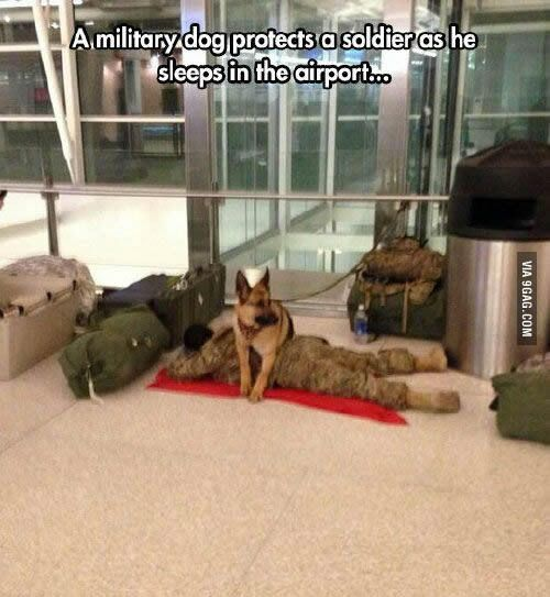 And that's why I trust dogs more than hoomans. - 9GAG