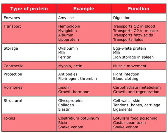 a study of proteins and their functions Proteins are molecules made of amino acids they are coded for by our genes  and form the basis of living tissues they also play a central role.