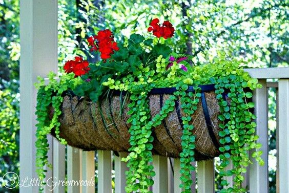 These Simple And Classic Fence Planters Hang Along The Railing Of Your Deck Or Along The Top Plants For Hanging Baskets Hanging Flower Baskets Hanging Baskets