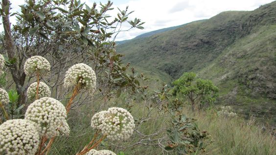 In Taboleiro, Minas Gerais - Leolivera