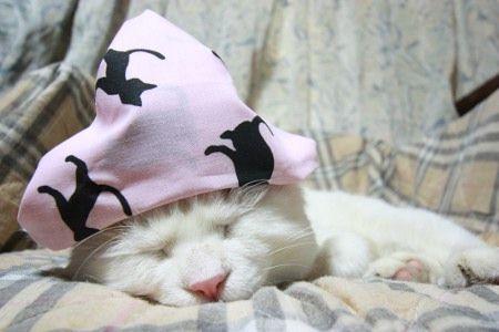 Catsparella: Shironeko Update