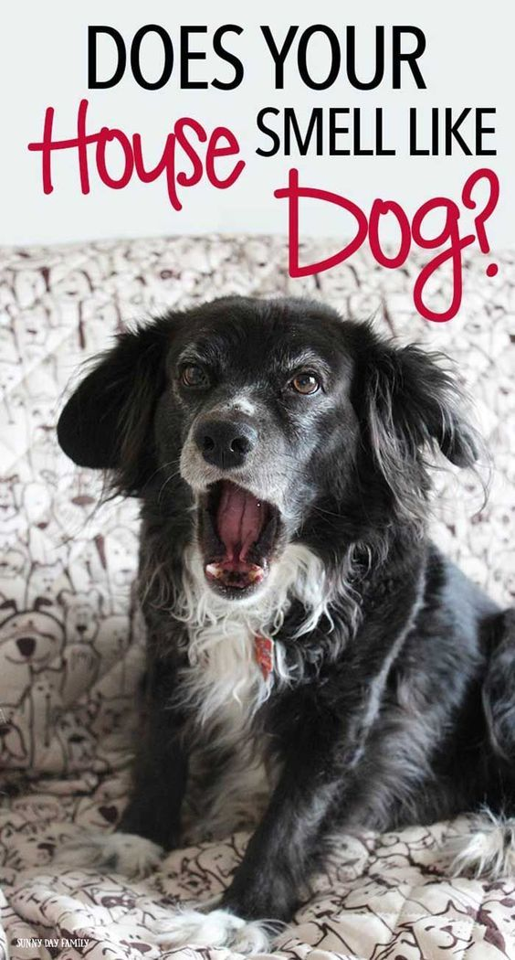 5 Things You Need To Clean Today To Get Rid Of Pet Odor Smelly