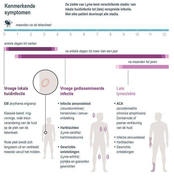 De late symptomen van Lyme