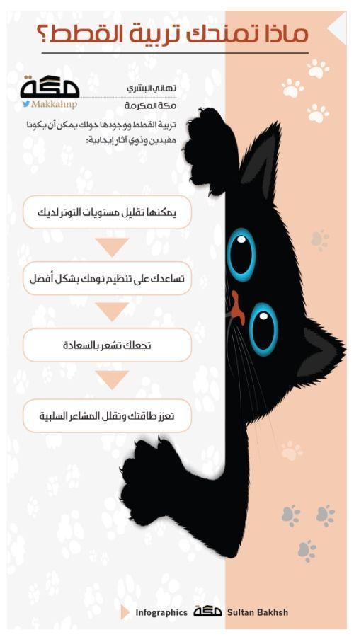 إنفوجرافيك ماذا تمنحك تربية القطط صحيفة مكة Infographic Infographic Lockscreen Art