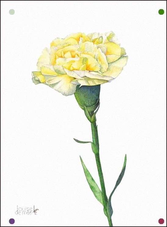 Carnation Watercolor Painting Carnation Print 5 By Louisedemasi In 2020 Watercolor Flowers Paintings Flower Drawing Flower Painting
