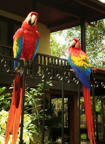 Aves de Costa Rica: