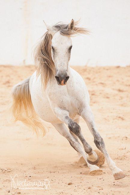 Berber - Pferdefotografie, Hundefotografie, Fotografie Bettina Niedermayr Pferde - Mensch & Pferd - Hunde- Portrait - Stallschilder - Kalender, Pferdekalender, Haflingerkalender mit Kohlfuchs Liz. Steiermark