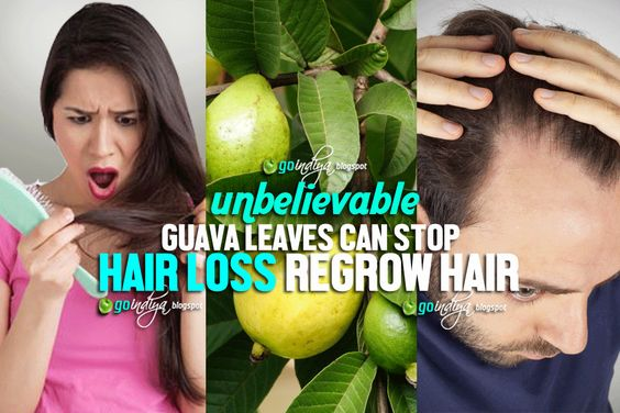 Unbelievable! Guava Leaves Can Stop Hair Loss - Regrow Hair Naturally ~ Natural Home Remedies. Simple and Effective