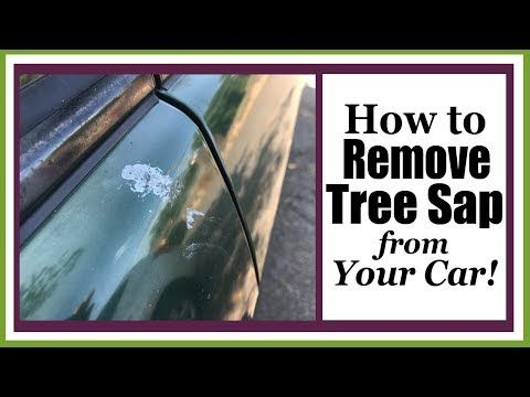 Tree Sap Can Be A Sticky Nuisance Giroud Tree Lawn Shows You A