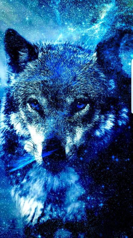 4k Galaxy Wolf Wallpaper Wolf Wallpaper Galaxy Wolf Ice Wolf Wallpaper