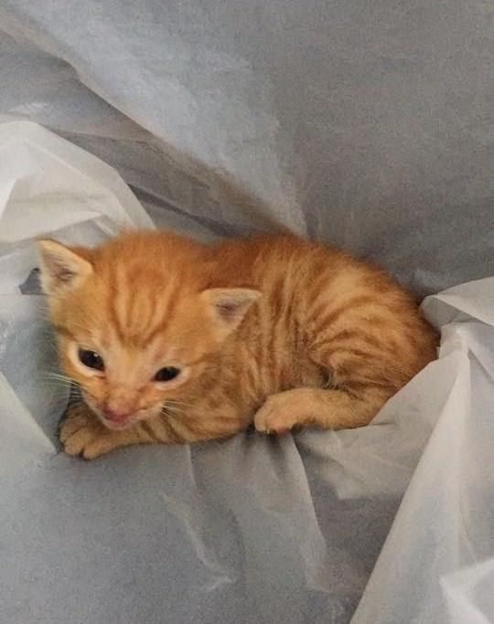 Image Result For Tiny Ginger Cat And Dog Cats And Kittens Kittens Tiny Kitten