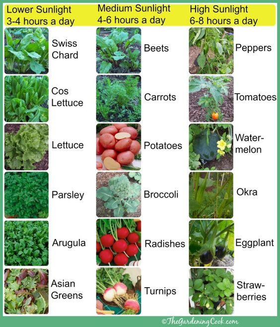 Sunlight vegetables and sun on pinterest - Plants that dont need soil natures wonders ...