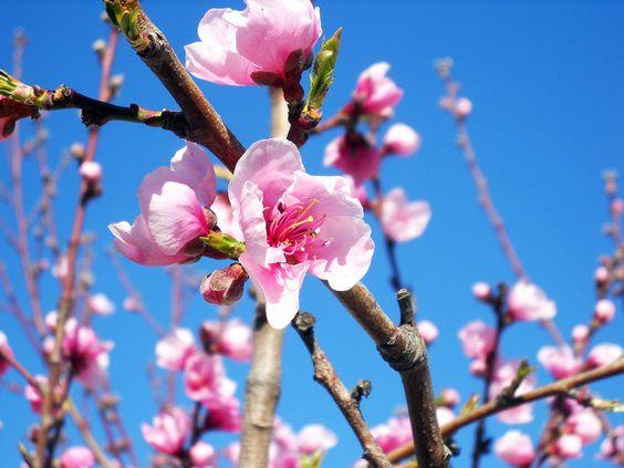 Primavera, desde mi casa :)
