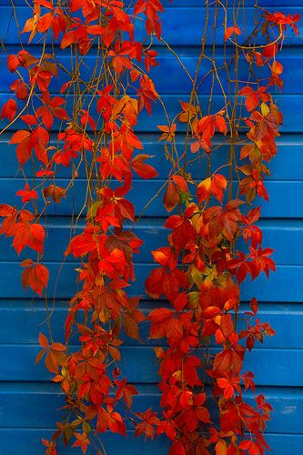 I love the contrast between blue and orange.