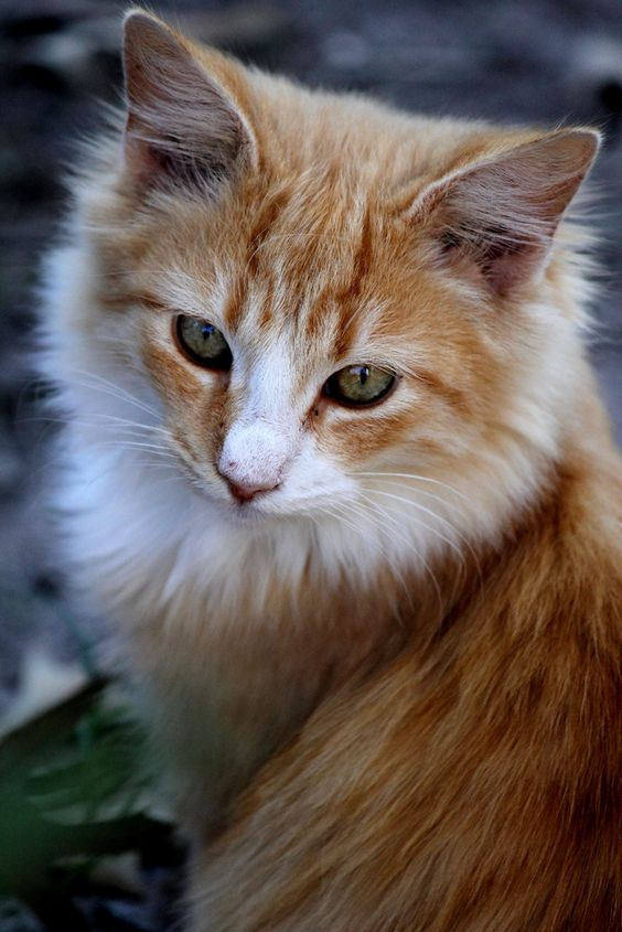 Transient's Cats v2 085c433bb16ff12d7b984c7fcf9f5f41