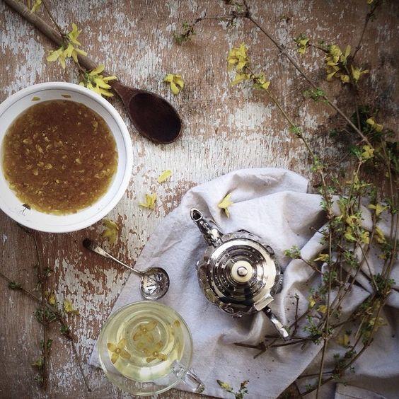 forsythia tea and syrup...