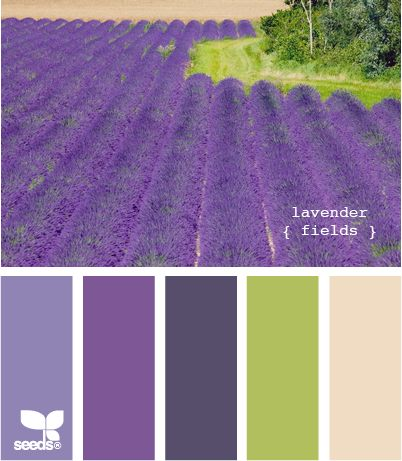 Color Palette: lavender fields.  I can almost smell it!  How wonderful it would be to stand there.