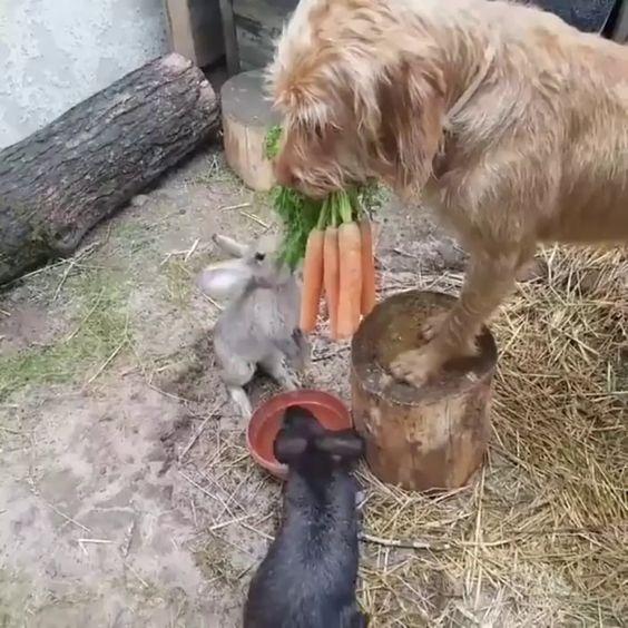 Doggo feeding his friends - 9GAG