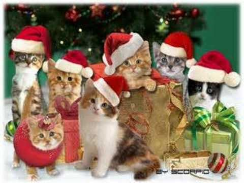 cats and christmas - Google Search