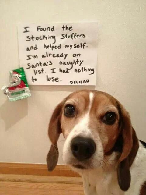 The Beagle Is A Type Of Small Hound Initially Reproduced As Scent