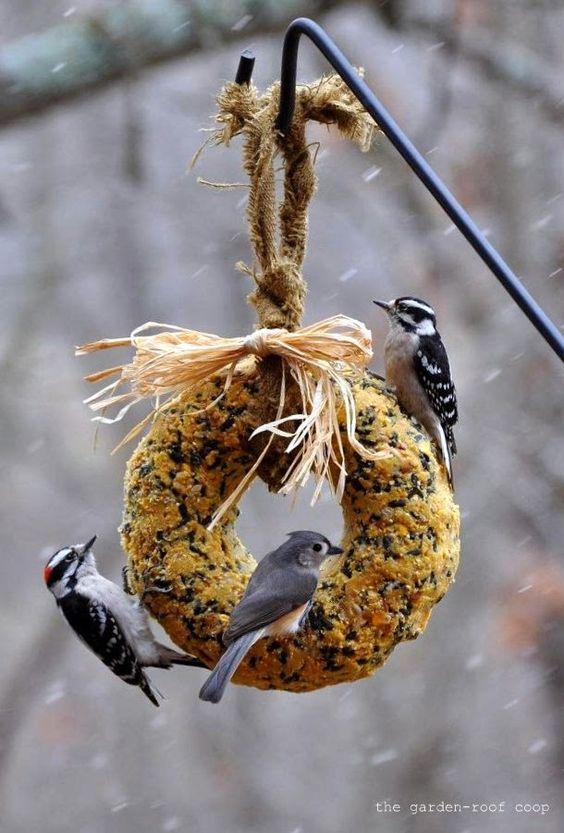 The garden roof coop diy suet wreath for the love of for How to make suet balls for bird feeders
