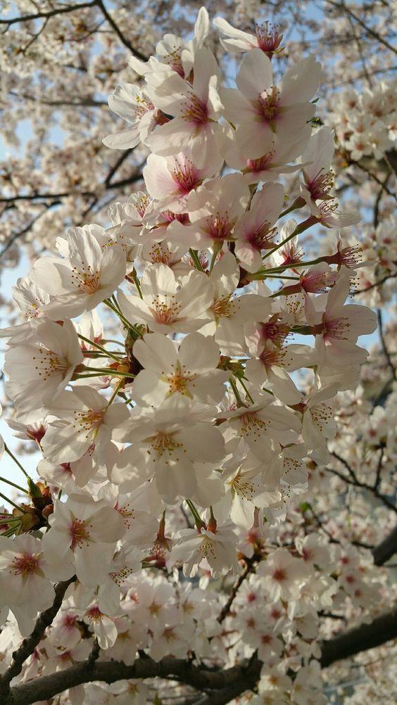 Por Mp Flower Garden Apple Flowers Flowers