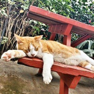 «Je voulais aller jusqu'à la boîte aux lettres. Vraiment.» | 19 chats qui ne sont rien sans leur café du matin