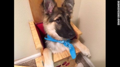 Puppy's special chair saves his life - http://dietandweightloss.tips4all.eu/puppys-special-chair-saves-his-life/