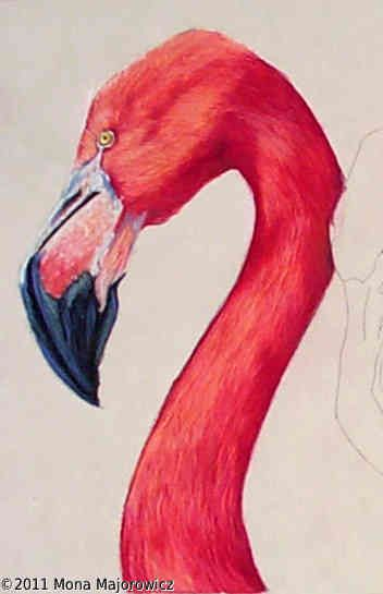 Flamingo painting flamingos and fur on pinterest for Flamingo feather paint