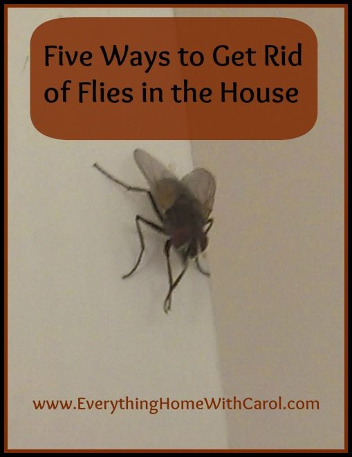 how to get rid of shit flies in the house