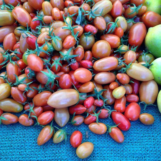 Tomatinhos: diferentes tons e tamanhos.