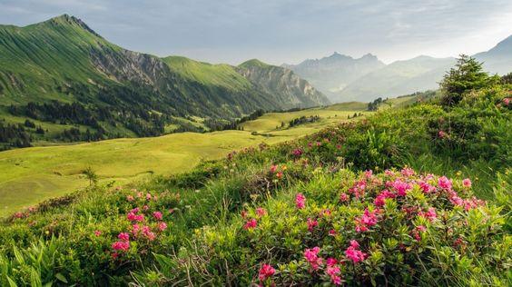 Original Alpenblumenweg Betelberg - Farbige Artenvielfalt