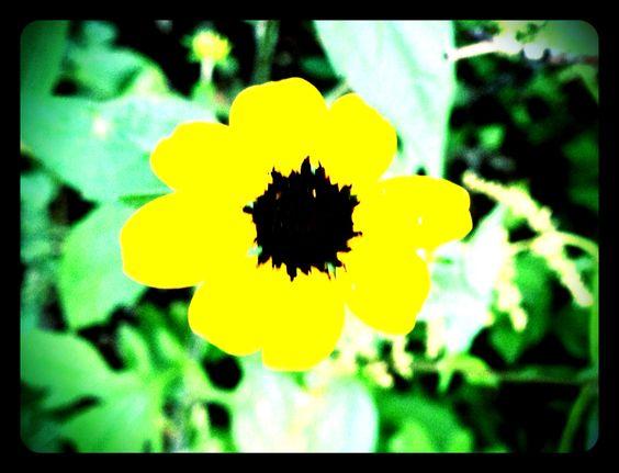 Overexposed looking flower