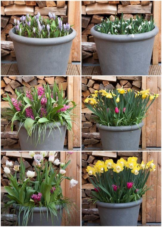 Dwie Kolorowe Kompozycje Warstwowe Sadzenie Cebulek Fot Ibulb Plants Garden Diy
