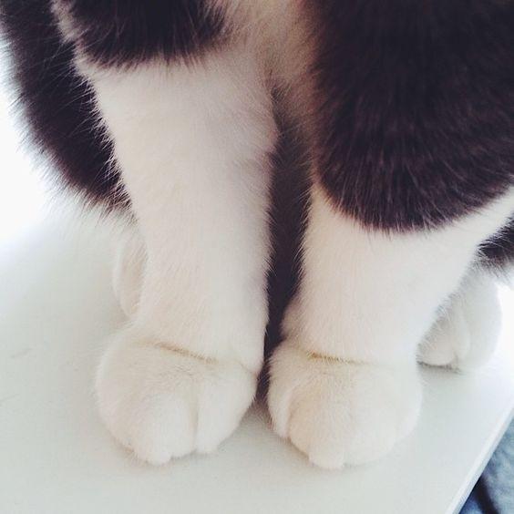 #catstagram #catsofinstagram #katt #exstray #paws #catpaws