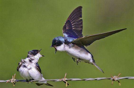 Bird Photography - 25 Brilliant Examples | AntsMagazine.Com